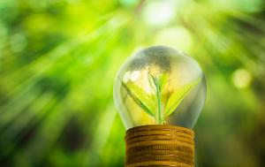 Fresh small tree growth in a bulb placed on gold coins with blurred green trees background with sunlights