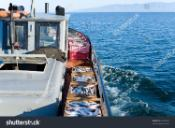 Fishing boat at sea with boxes of fresh fish just caught