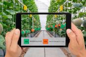 Vegetables in a greenhouse behind a digital tablet