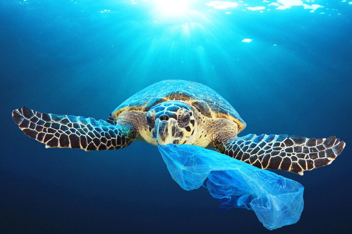 Plastic pollution in ocean environmental problem.