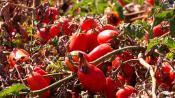 Όχι πατέντες σε φυτά και σπόρους που παράγονται βιολογικά
