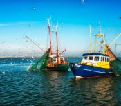 Dutch fishing trawlers surrounded by seagulls on a calm sea