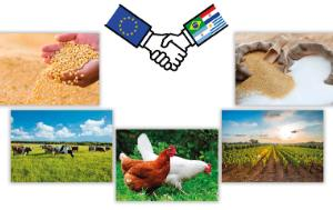 Hand shaking with a EU flag and Mercosur flags as well as several different pictures: one with cows, hens, vineyard, sugars and soybeans
