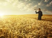 man looking in a spotting scope in the middle of a wheat field