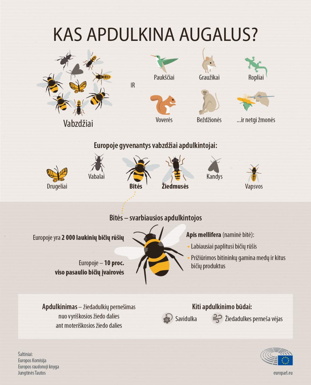 Infografikas vaizduoja augalus apdulkinančius vanzdžius ir kitus gyvūnus