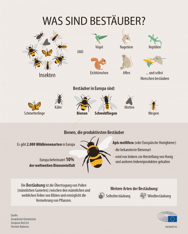 Die Infografik zeigt, welche Tiere Bestäuber sind