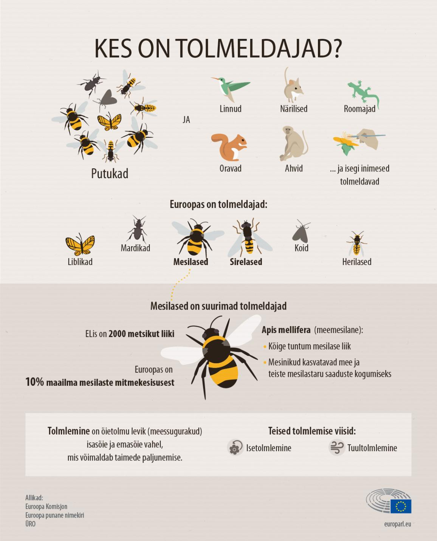 Infograafika: kes on tolmeldajad?