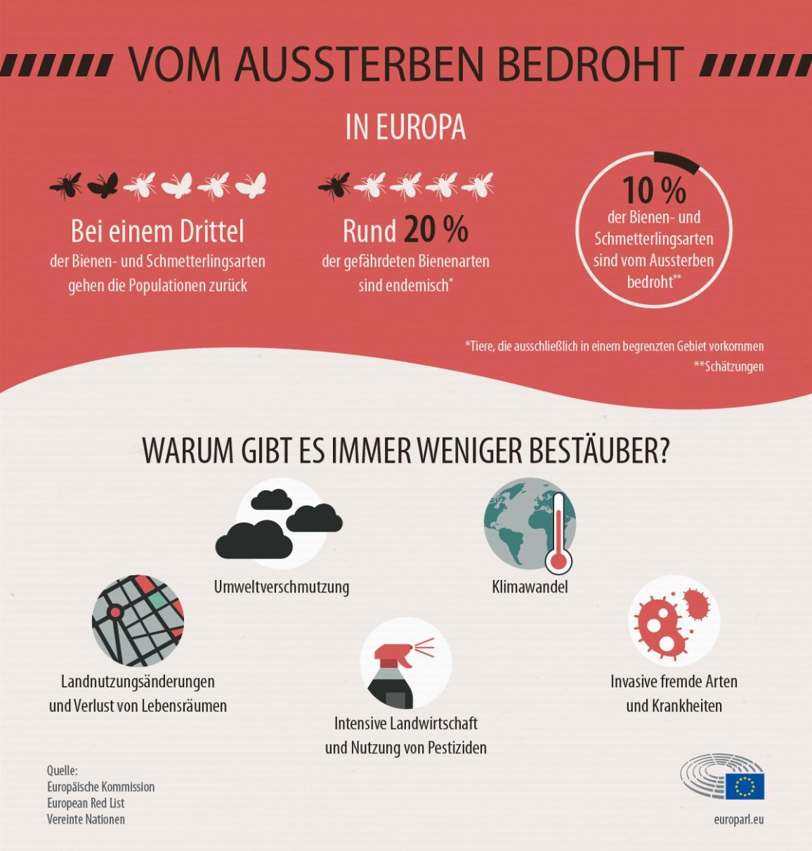 Infografik mit Statistiken zum Rückgang der Bestäuber und den Gründen