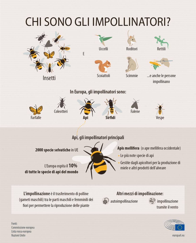 Infografica: chi sono gli impollinatori