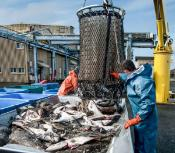 Implementation and Impact of EMFF Measures on the Common Fisheries Policy