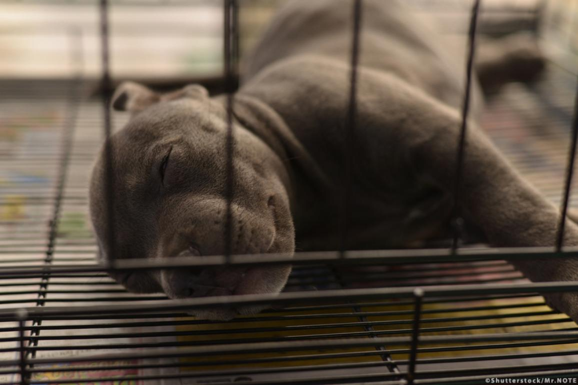 A dog sleeps in a cage