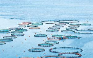 Fish sea farm with floating circle cages