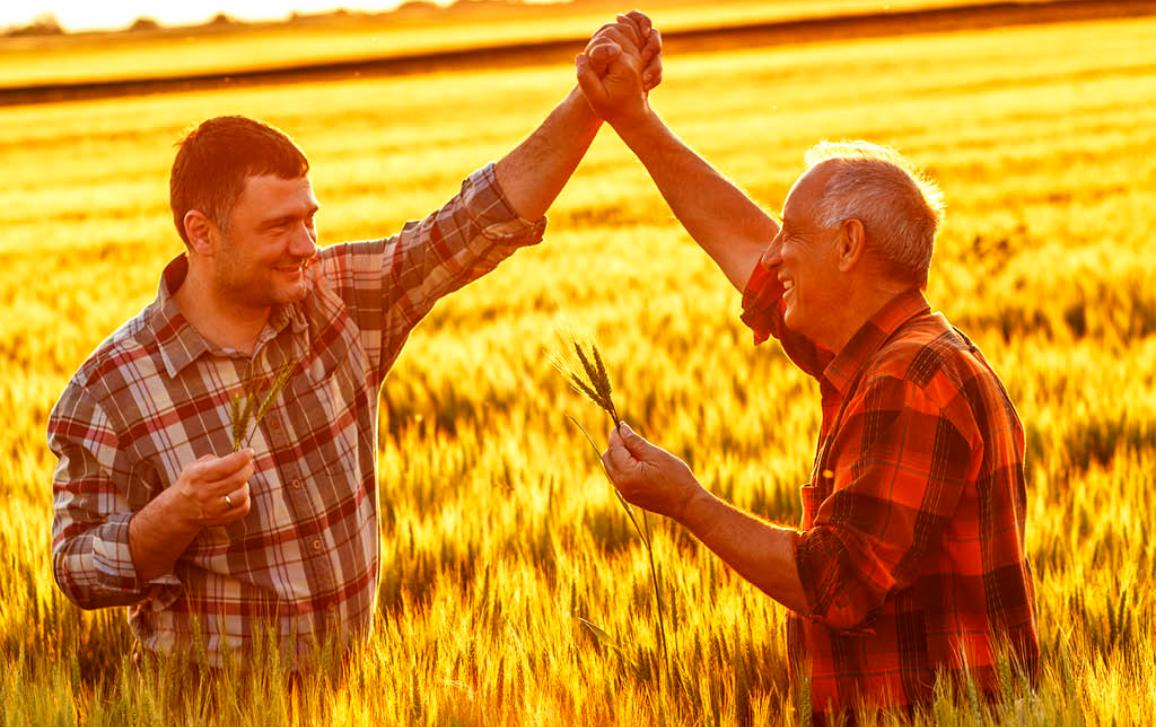 Two farmers with their arms in the air and hands clasped in a field of wheat