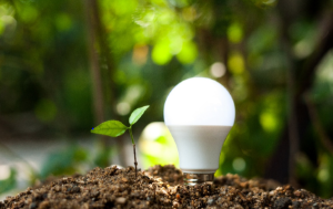 concept energy saving lightbulb with plant growing and sunshine