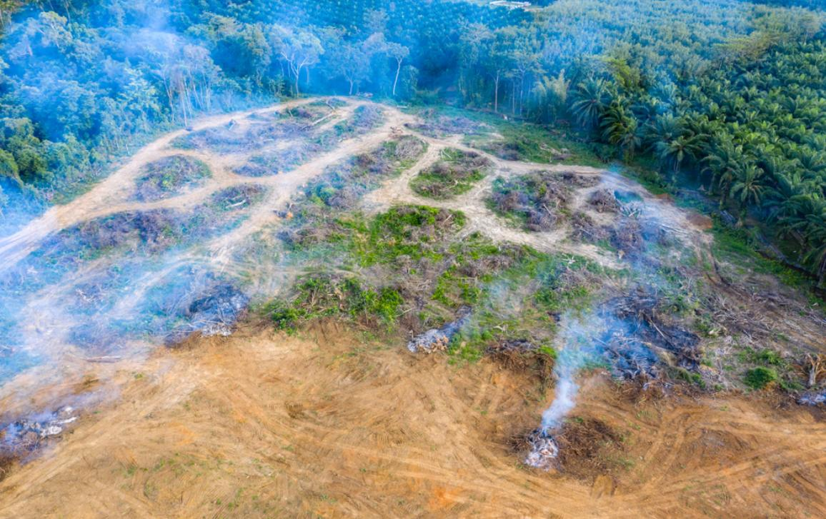 Burning field in an Amazonian rain forest