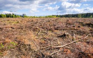 Deforestation-Environmental damage