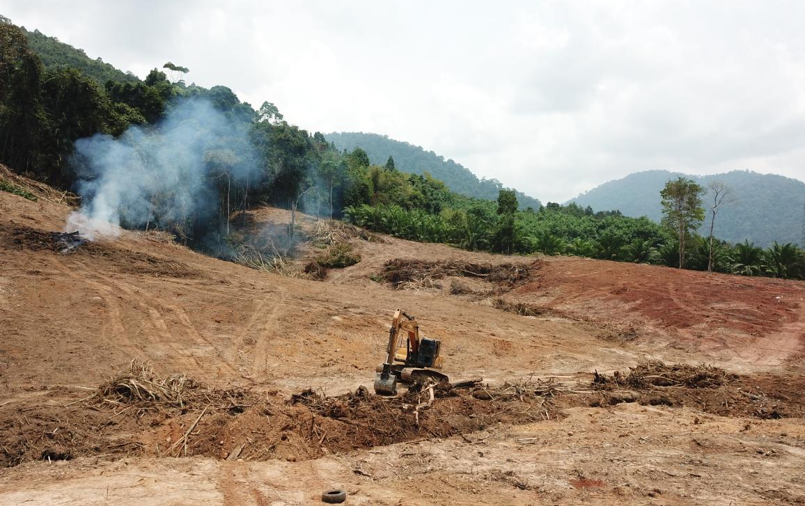 Deforestation globally