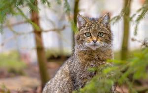 Article - Protection et bien-être des animaux :les règles de l'UE expliquées (vidéos)