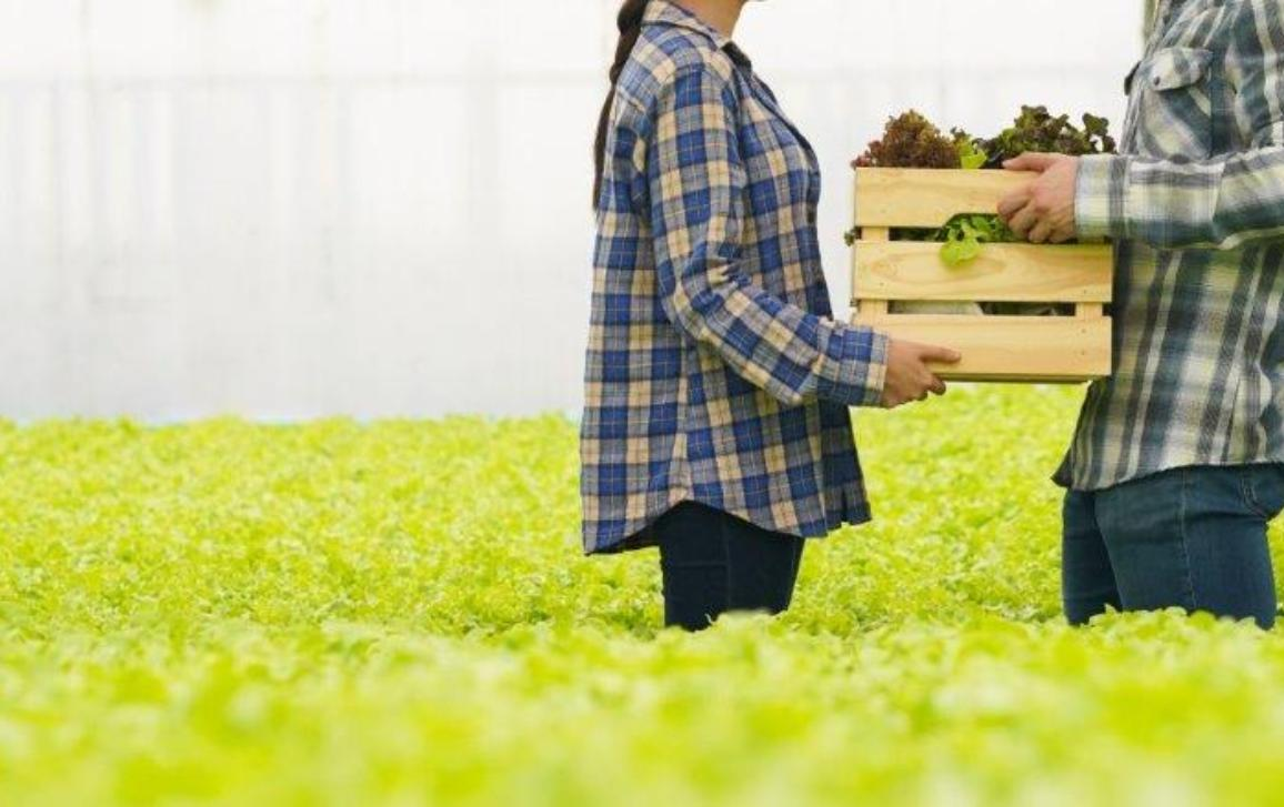2 persons holding a box full of vegetables in the middle of a field