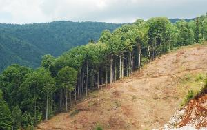 a hill with trees and ground with no trees