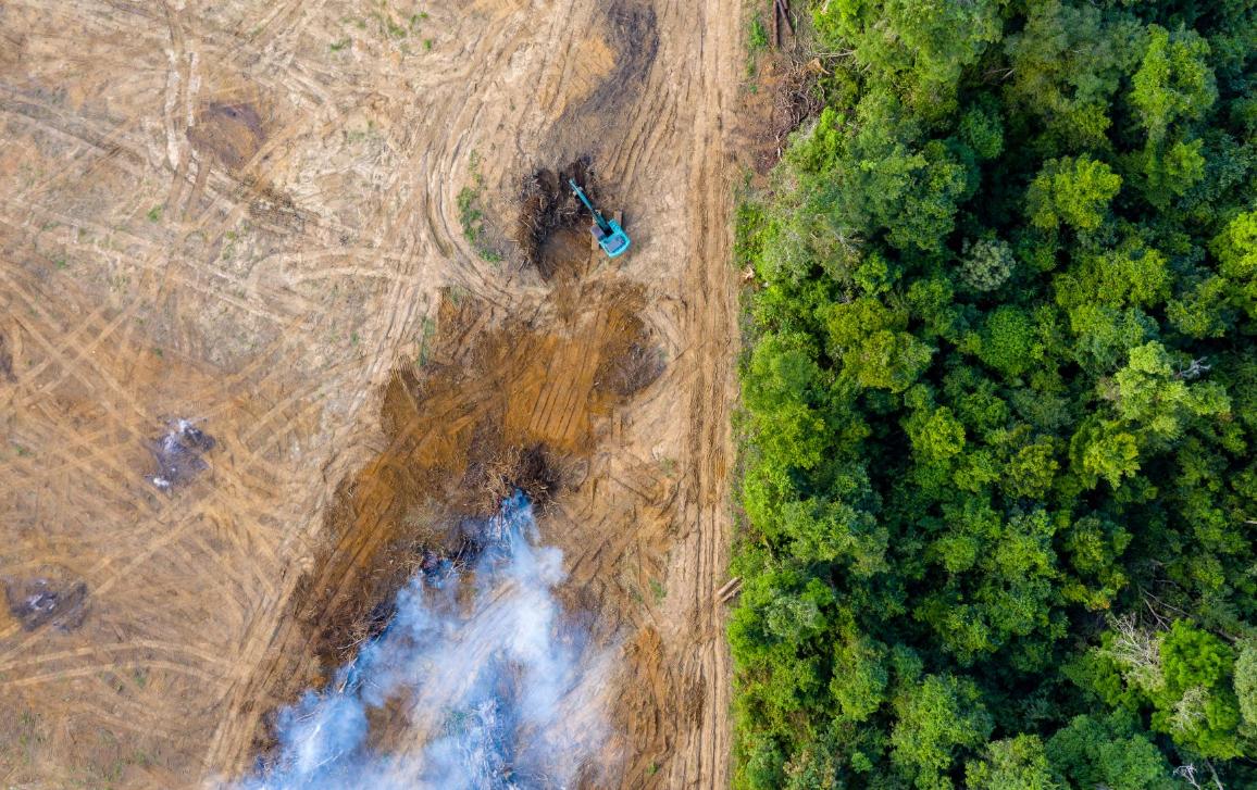 Rainforest removal