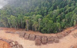 Logging_deforestation