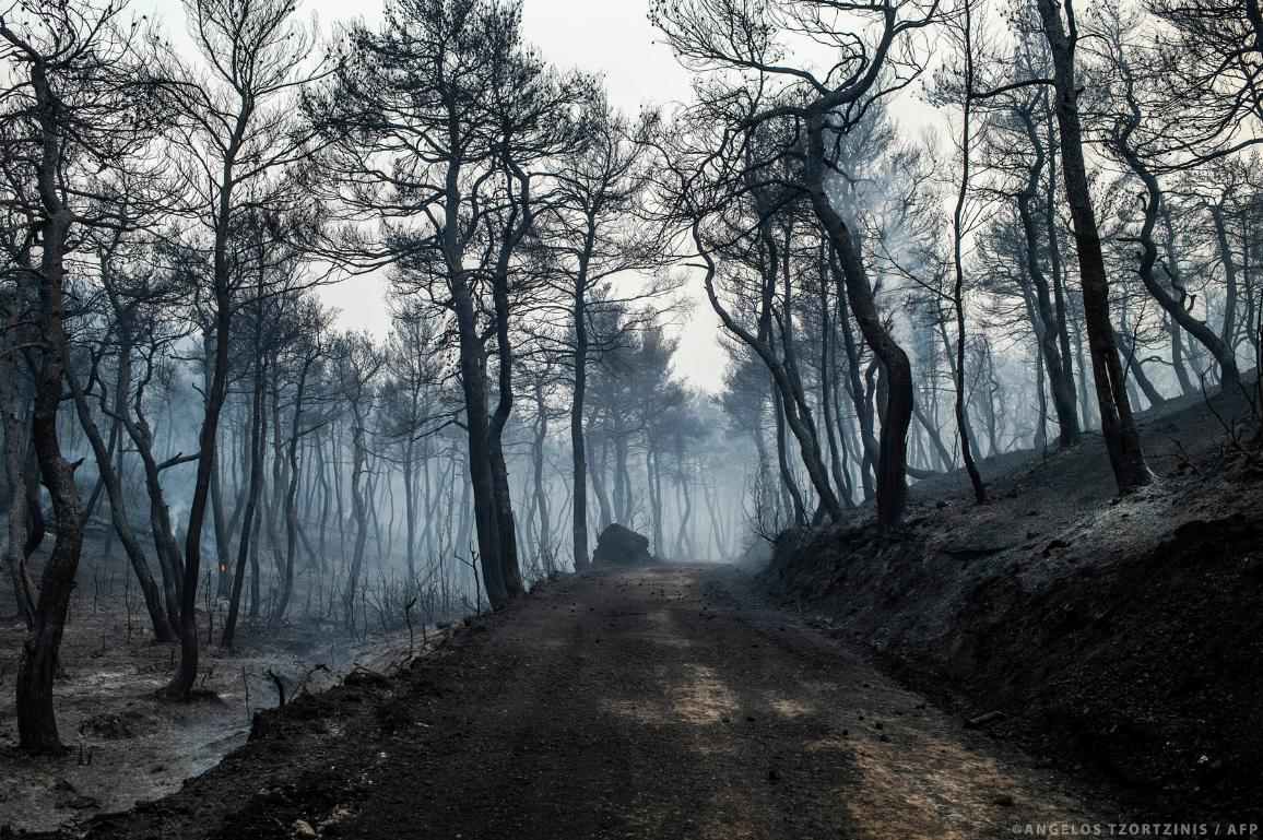Smoke rises near a forest road following a wildfire near the village of Makrimalli on the island of Evia, northeast of Athens, on August 14, 2019.©AFP/ANGELOS TZORTZINIS