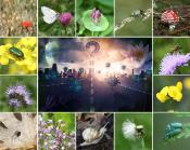 Biodiversity Hearing