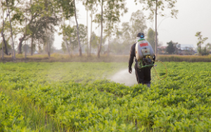 The impact of pesticides on human health and food security in developing countries