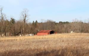abandoned fields with a red abandoned shed in the background among trees