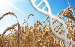 Photo image of bright sunny sky, yellow crops and white genome vector