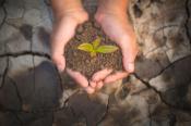 Plant in handful of soil
