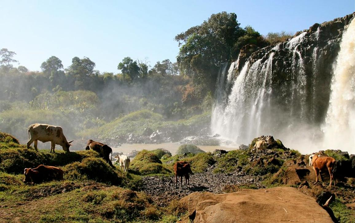 Waterfall on the Blue Nile in Ethiopia with cattle grazing in the forefront.