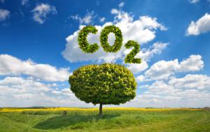 CO2 written above a tree in the middle of a field