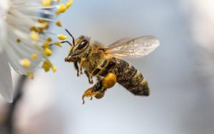 Bee Guidance