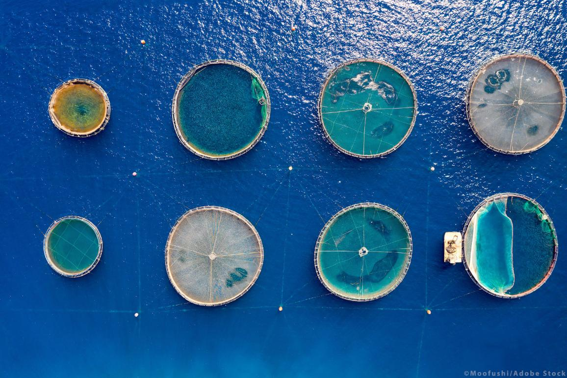 Aerial view of a fish farm with the round farming nets in the blue waters of the Aegean Sea, Greece.