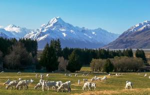 Animals on a meadow with mountains in background