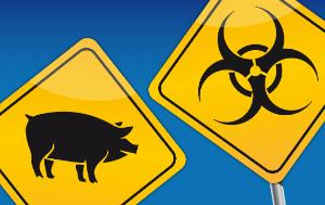 One swine flu vector icon in black next to one pig pictogram in black, both on yellow backgrounds