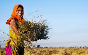 Indian woman working in a farm